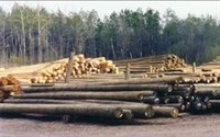 Click to view album: Timber Piling