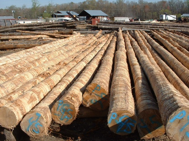 Piling art thureson inc for Wood piling foundation